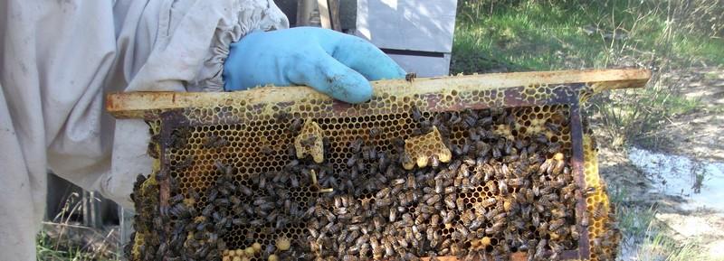 EA avec plusieurs ruches 410