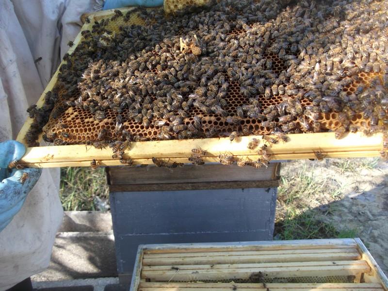 EA avec plusieurs ruches 510