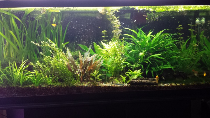 My 55 Gallon High Tech - Tons of Pictures! - Page 2 1211