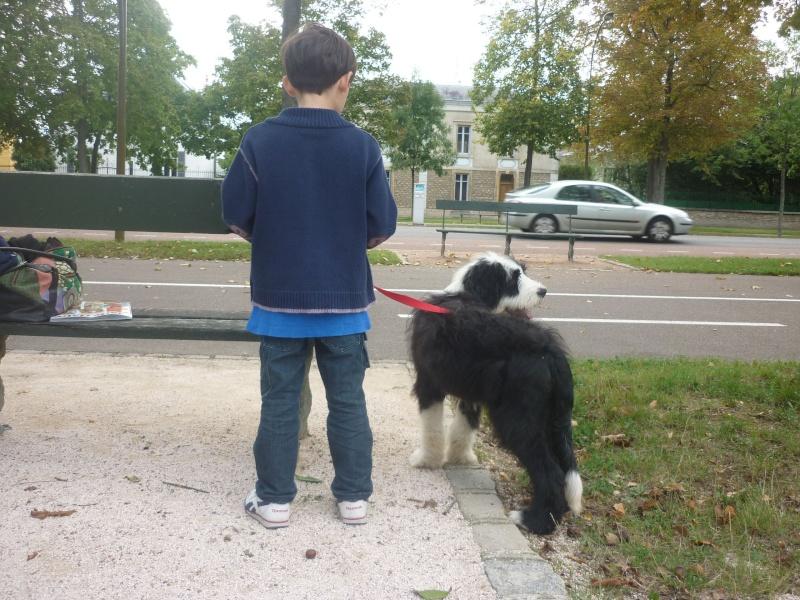 De chiot a chien? - Page 4 Hindi_20