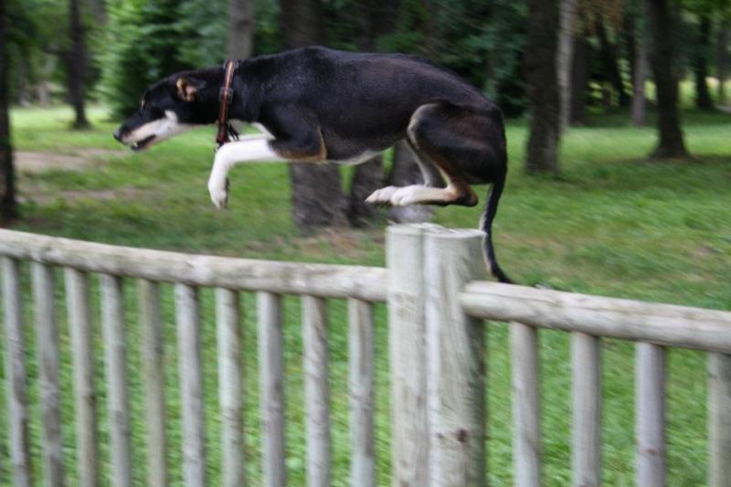 Photo de vos chien noir et beige! 28263110