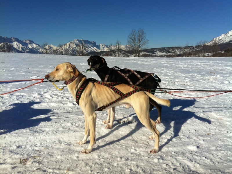 Vos chiens et leurs harnais! Photo  - Page 2 Img_1110