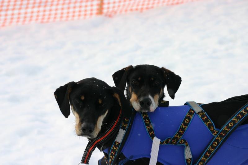Photo de vos chien noir et beige! - Page 2 Img_8410