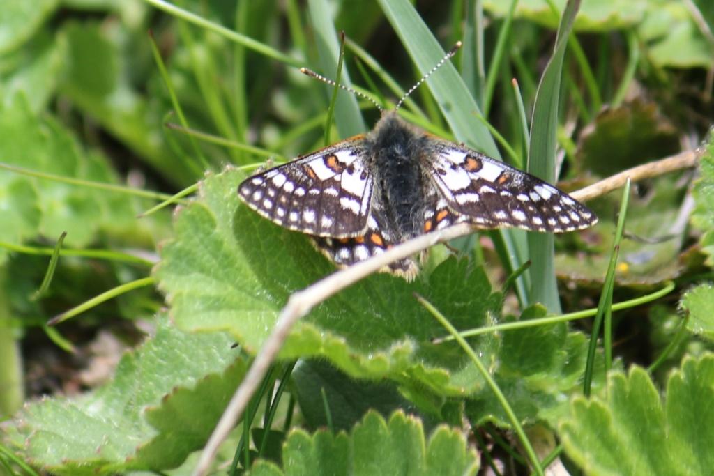 Ma passion de l'entomologie. 624a2332