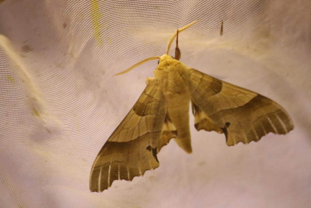 Ma passion de l'entomologie. 624a2350