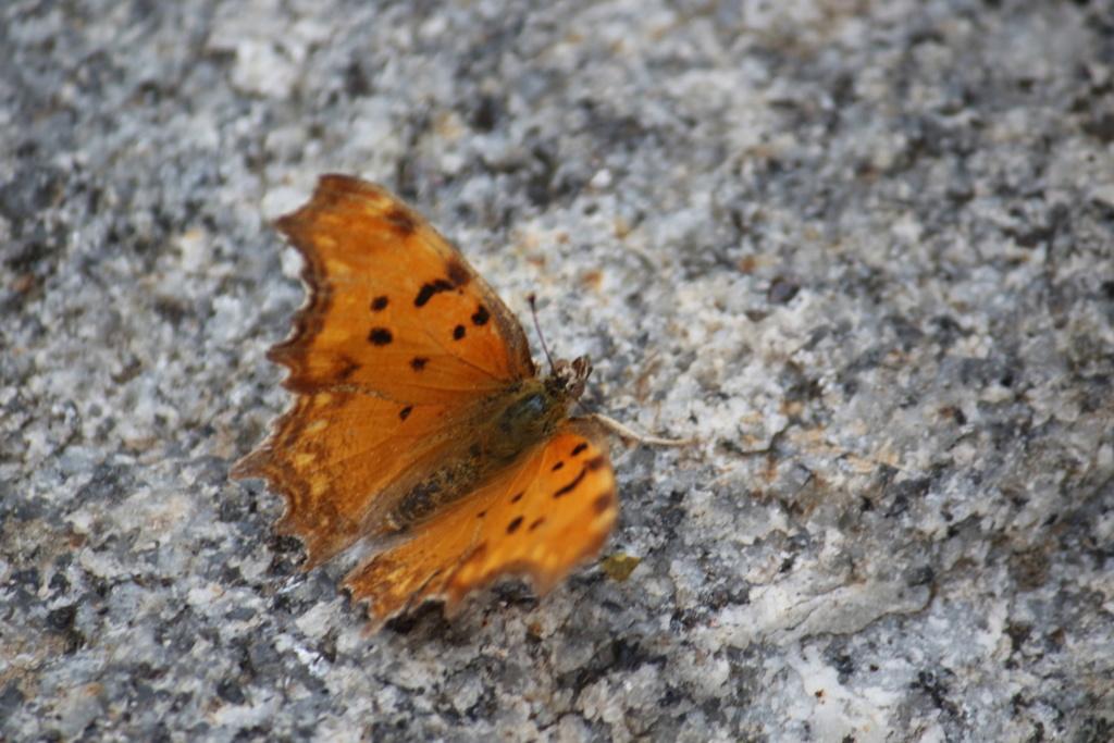 Ma passion de l'entomologie. 624a2411