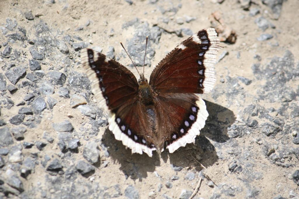 Ma passion de l'entomologie. 624a2474