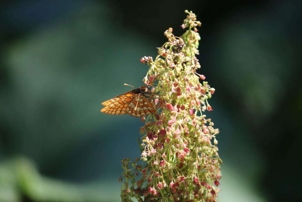 Ma passion de l'entomologie. 624a2519