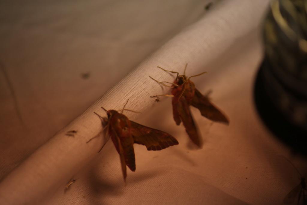 Ma passion de l'entomologie. 624a2523