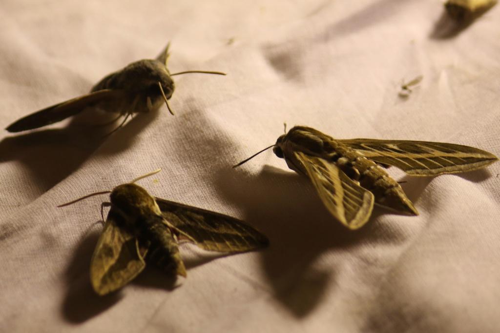 Ma passion de l'entomologie. 624a2525