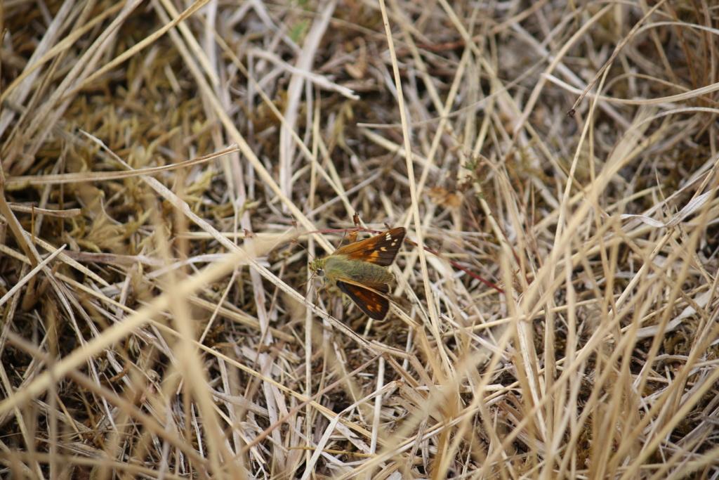 Ma passion de l'entomologie. - Page 5 624a2625