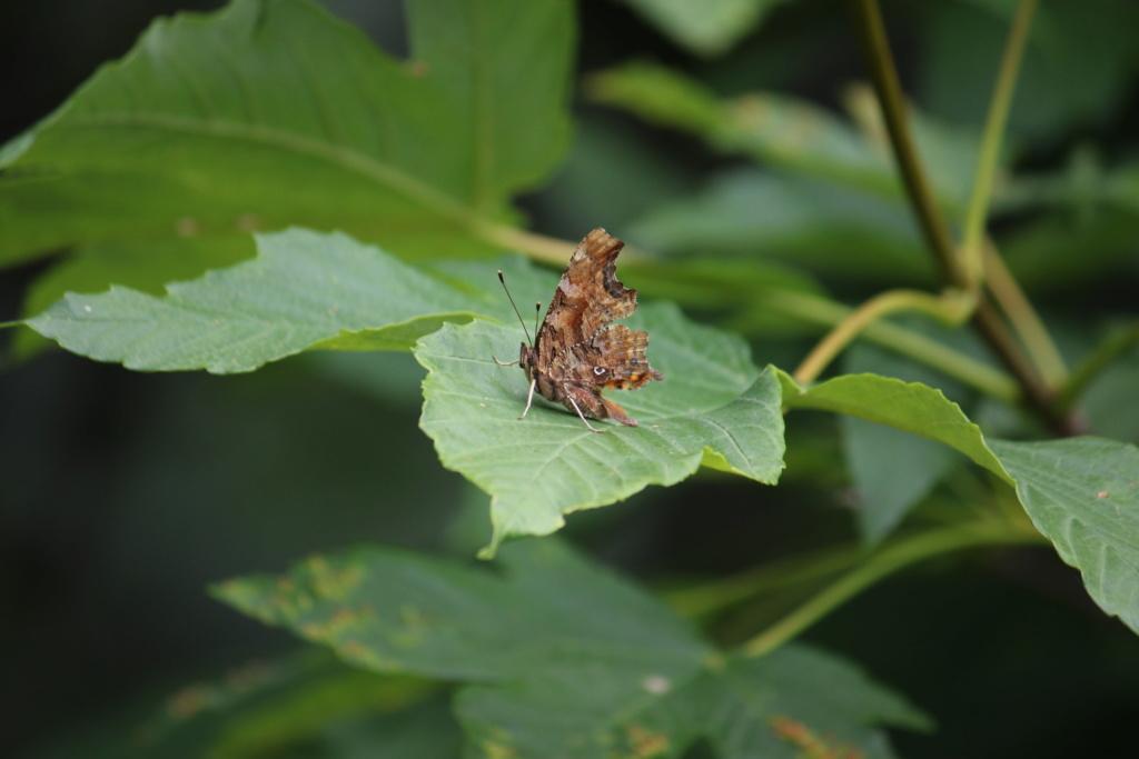 Ma passion de l'entomologie. 6410
