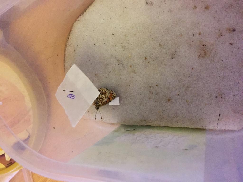 Ma passion de l'entomologie. - Page 6 Img_4825
