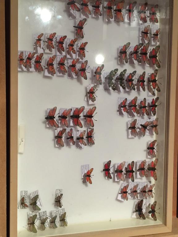Ma passion de l'entomologie. - Page 6 Img_4828