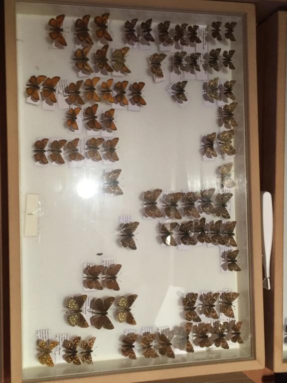 Ma passion de l'entomologie. - Page 6 Img_4829