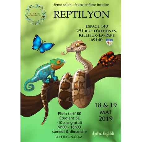 Papillyon devient Reptilyon. Inscri10
