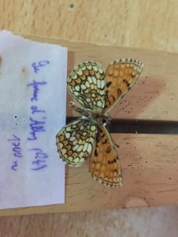 Ma passion de l'entomologie. - Page 6 Thumbn10