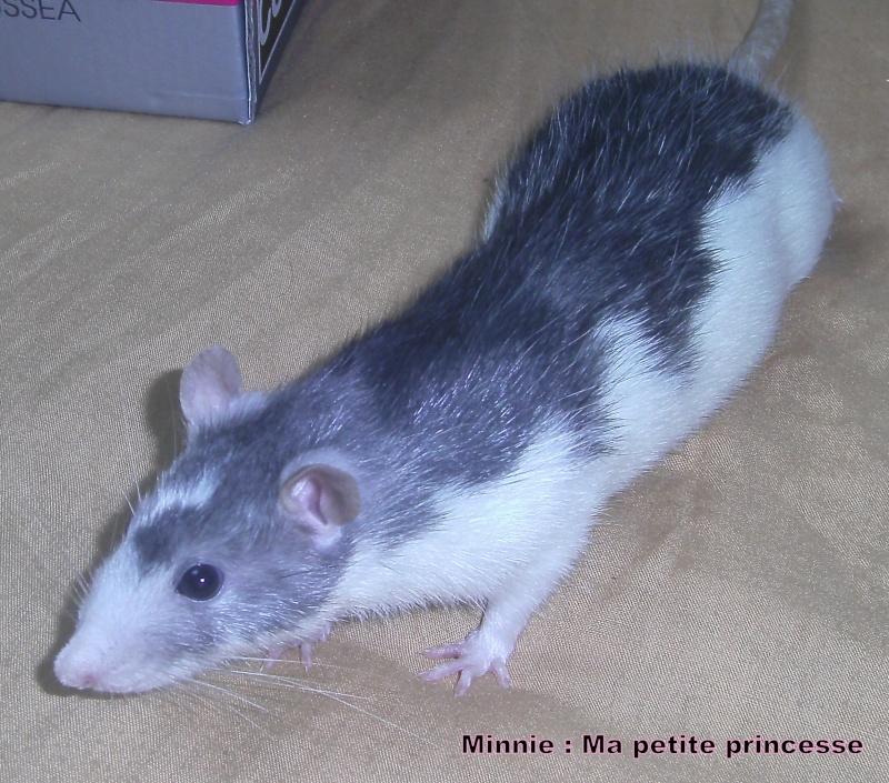 Minnie et Tic  Pict0027