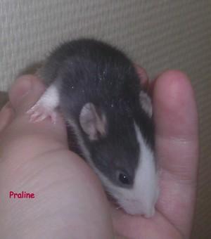 Minnie et Tic  - Page 10 Pict0293