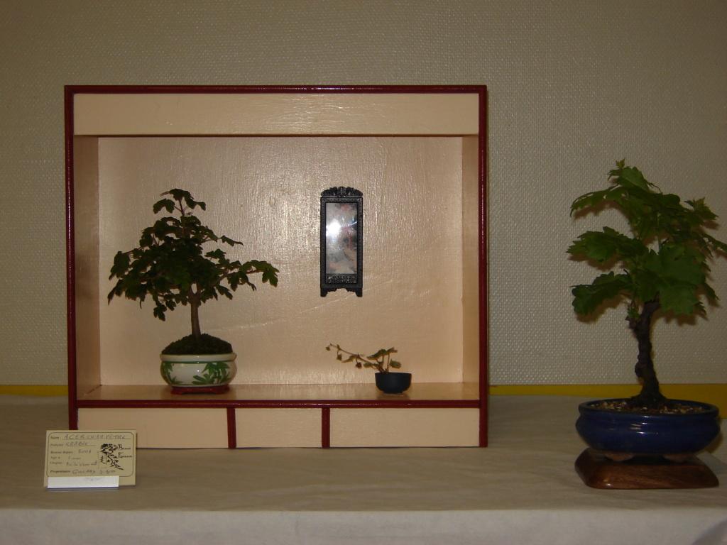 la passion du bonsai - Page 37 03610