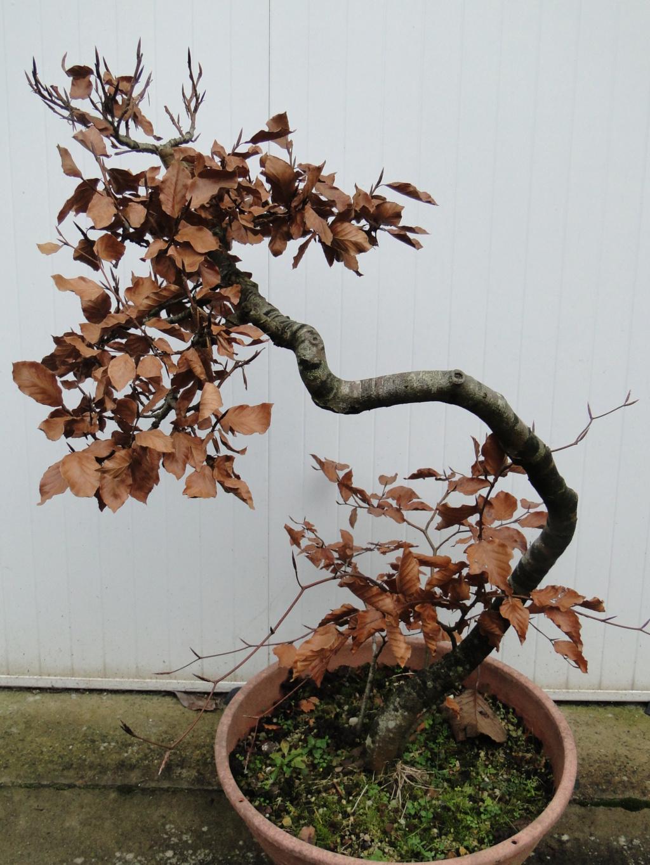 la passion du bonsai - Page 5 13_20110