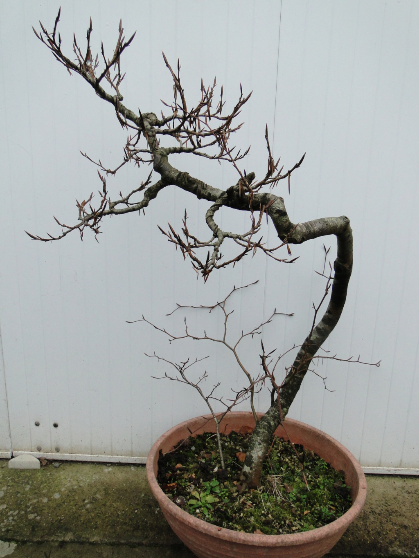 la passion du bonsai - Page 5 14_20110