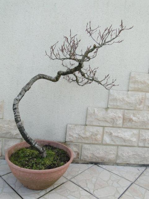 la passion du bonsai - Page 5 16_20210