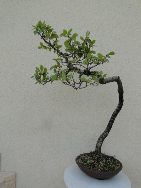 la passion du bonsai - Page 5 20_20210