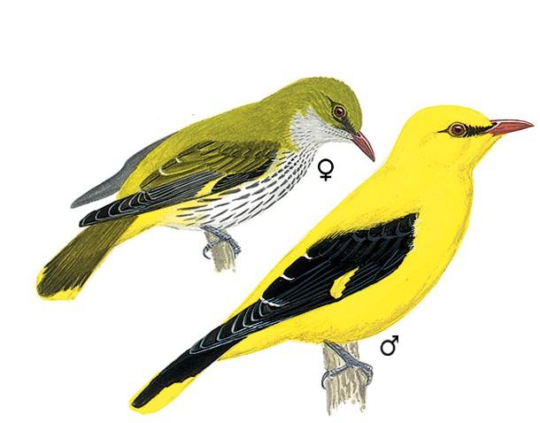 Comptage national des oiseaux - Page 2 46-zoo10