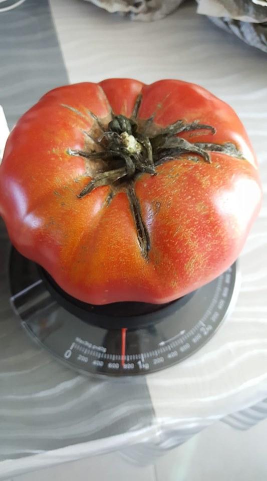 Tomates 2019 - Page 15 700_g10