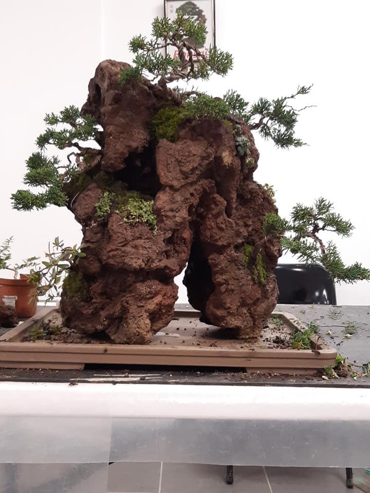 la passion du bonsai - Page 32 75412010