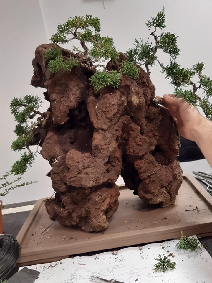 la passion du bonsai - Page 32 76197610