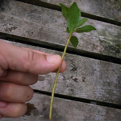 la passion du bonsai - Page 10 Boutur11