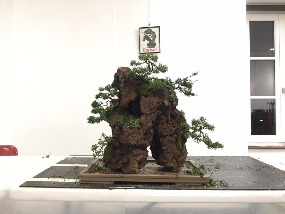 la passion du bonsai - Page 32 Ds085610