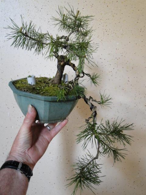 la passion du bonsai - Page 21 Dsc00187