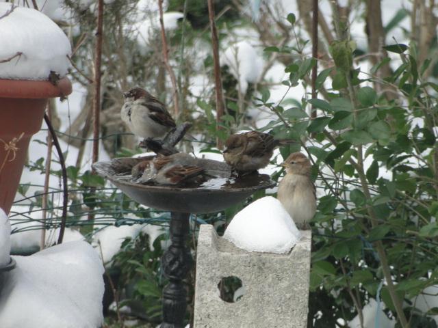 les oiseaux et petites bêtes au cours de nos balades - Page 15 Dsc00265