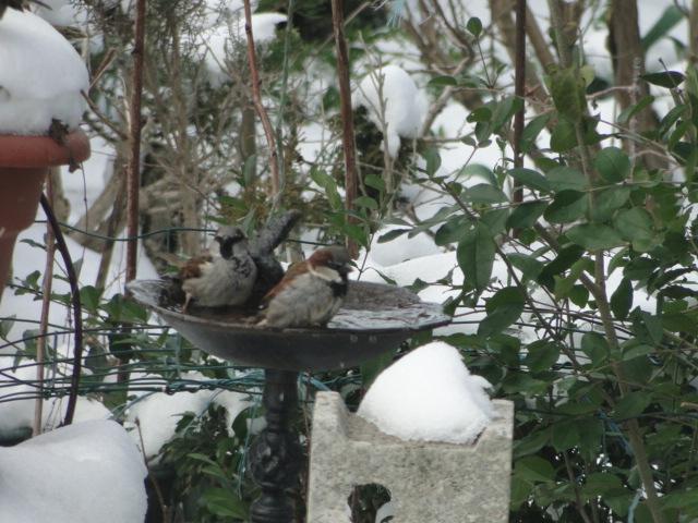 les oiseaux et petites bêtes au cours de nos balades - Page 15 Dsc00266