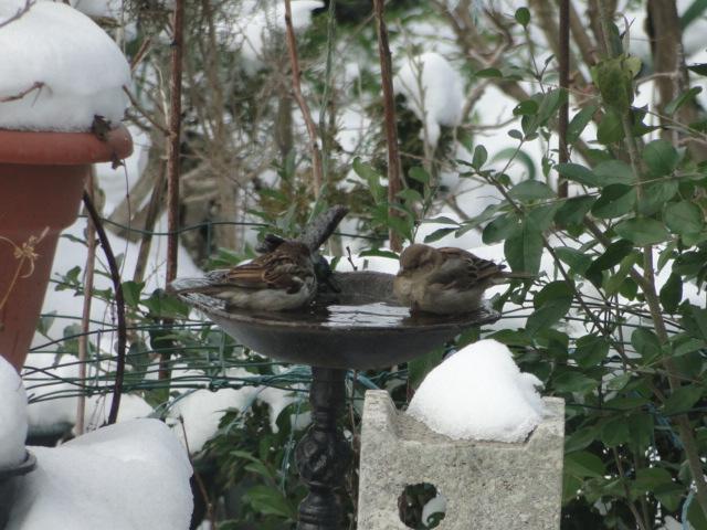 les oiseaux et petites bêtes au cours de nos balades - Page 15 Dsc00267