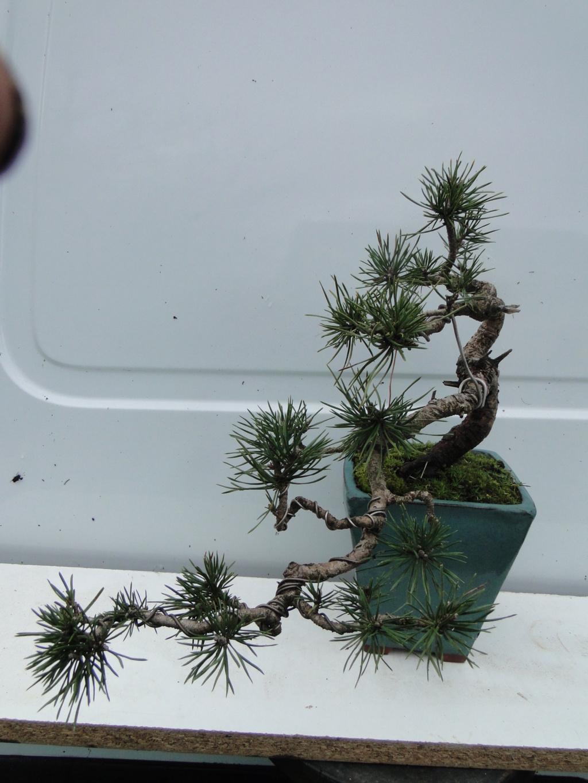 la passion du bonsai - Page 21 Dsc00270