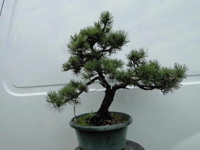 la passion du bonsai - Page 21 Dsc00277