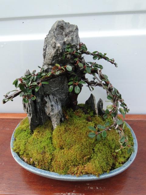 la passion du bonsai - Page 22 Dsc00286