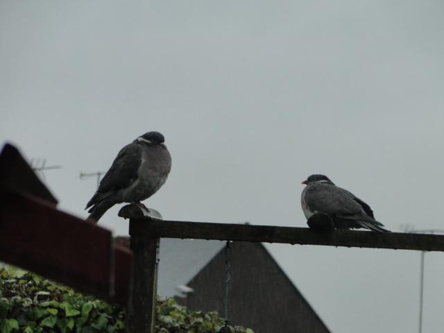 les oiseaux et petites bêtes au cours de nos balades - Page 28 Dsc00431