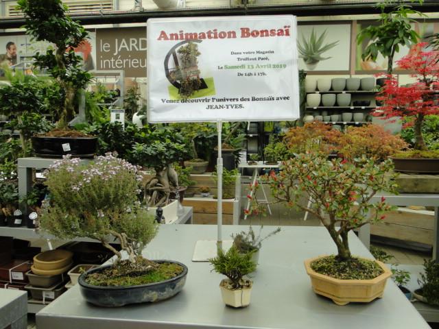 la passion du bonsai - Page 24 Dsc00445
