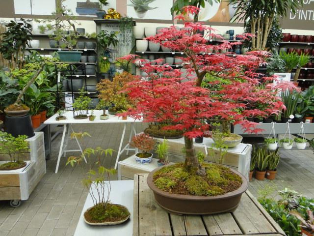 la passion du bonsai - Page 24 Dsc00451