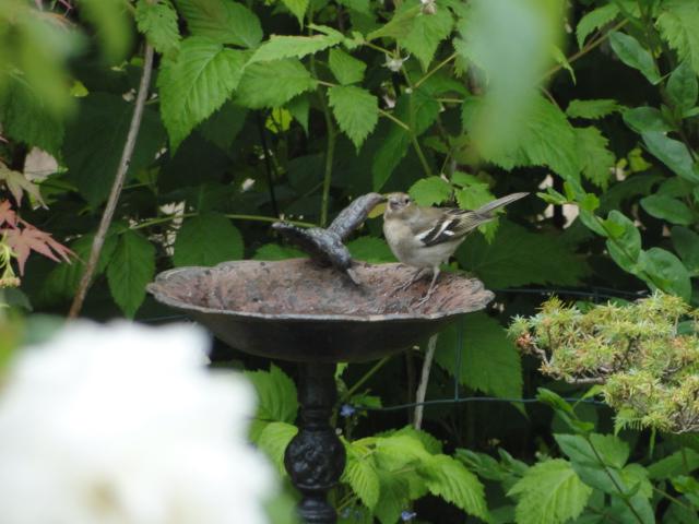les oiseaux et petites bêtes au cours de nos balades Dsc00783