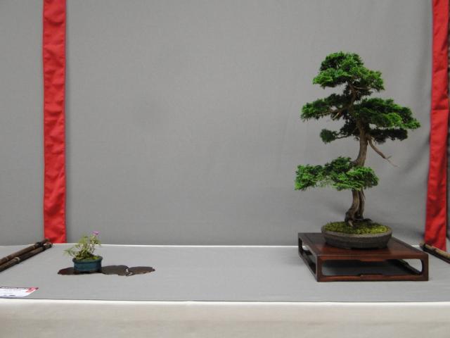 la passion du bonsai - Page 29 Dsc01629