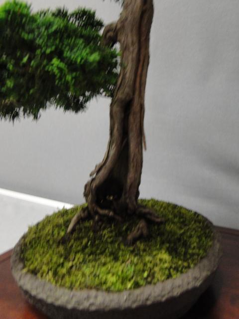 la passion du bonsai - Page 29 Dsc01630