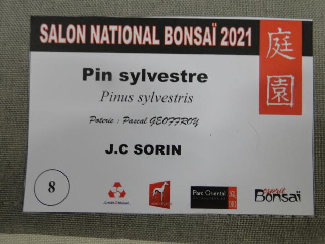 la passion du bonsai - Page 29 Dsc01633