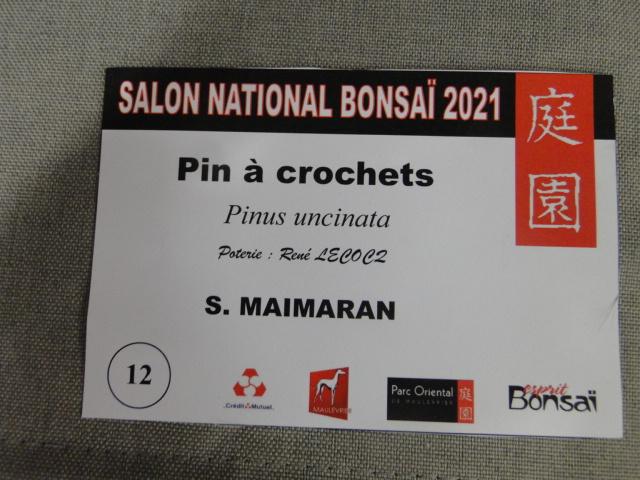 la passion du bonsai - Page 29 Dsc01642