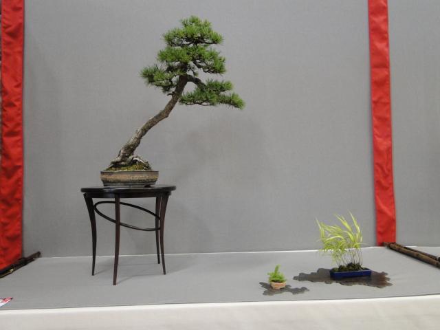 la passion du bonsai - Page 29 Dsc01643